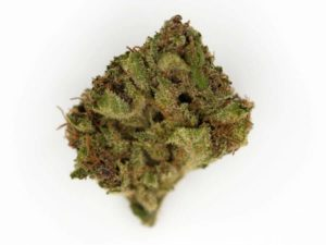Blueberry Muffin Strain for sale online