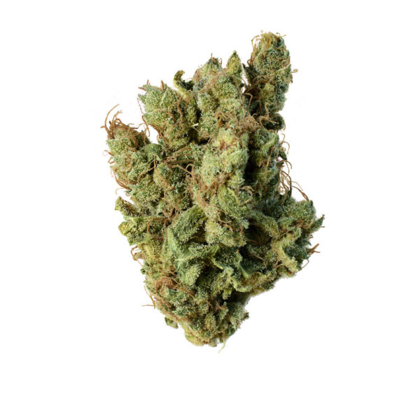 Where to buy Super Silver Haze Strain